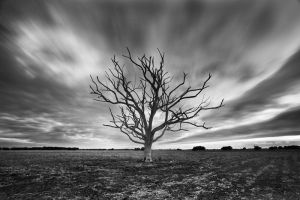 Windy Tree by Dreampixphotography