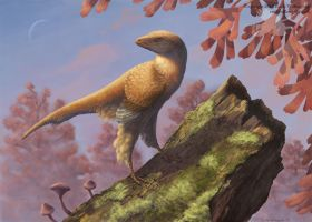Eosinopteryx by EWilloughby