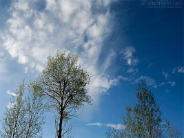 The Tree on the Hill II by wroth