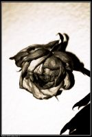 withered love 2 by avaladez