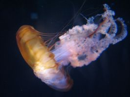 Jellyfish by tower-junkie-Shark