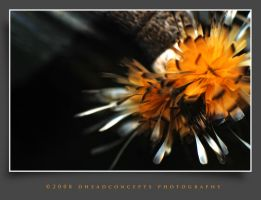 Abstract1 by dhead