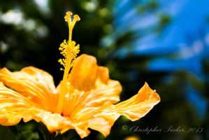 Yellow as the Sun by cdpstudios