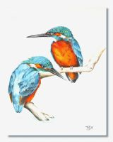 Kingfishers by Atriedes