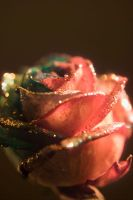 Christmas Happy Roses Trial by RAINBOWedROSES