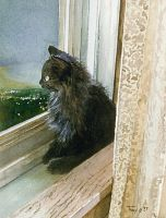 Kitten in Window by hank1
