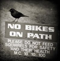 No Bike No Squirrel by JillAuville