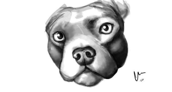 Speed paint Pibble by TiredOrangeCat