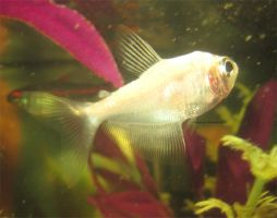 My new white skirt tetra by MaguschildCloud