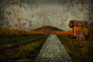 My Vineyard by arna