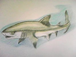 grey nurse shark by evildollie