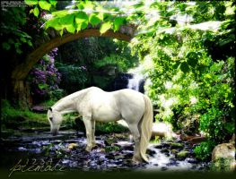 Grey horse contemplating water by hrhirene