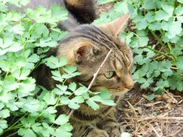I Love the Color Green by Kitteh-Pawz