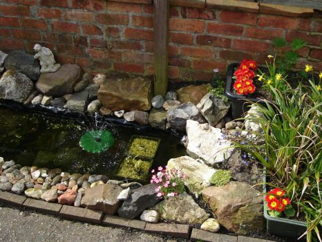 My pond side view by Thelma1