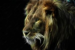 lion by uktilly