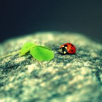 lucky ladybird by all17
