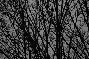 Black and white naked trees by giovimonto
