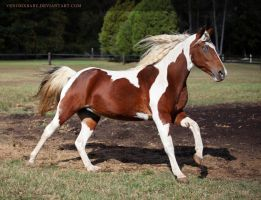 bay tobiano paint 4 by venomxbaby