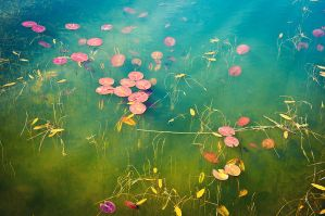 Water Lilies by Freggoboy