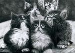 Perser Kittens by Yankeestyle94