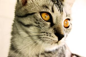 """our cat """"dori"""" by Tschisi"""