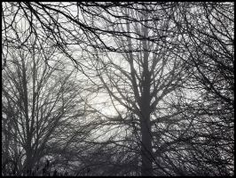 Fog Through The Branches by theory6-brian