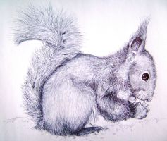 ballpoint squirrel by SwarzezTier
