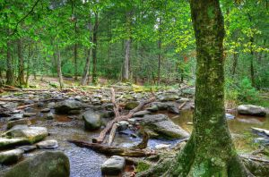 Cades Cove stream by PaulWeber