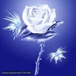 White Frost Rose by ValkyrieNZ