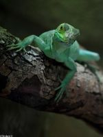 Green reptile 3 by LOmbre24