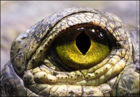 Golden eye of........... ????? by woxys