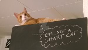 I'm not smart by MissAchton