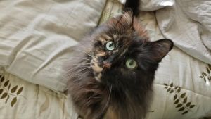 My cat, Tootsie. by simpspin