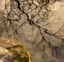 reflintion on the water of a tree branch by Nipntuck3
