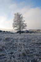 Frost tree 2 by Penzone