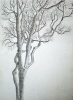 Tree sketch 1 by limegreenguitar