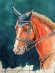 Jumping horse by Takir