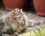 stray cat by tibbet2000
