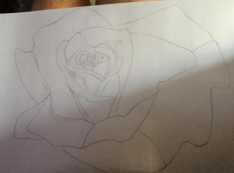 Rose sketch by phoebe-d