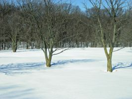 618 - snow trees by WolfC-Stock