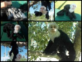 Chester The Capuchin by KaypeaCreations