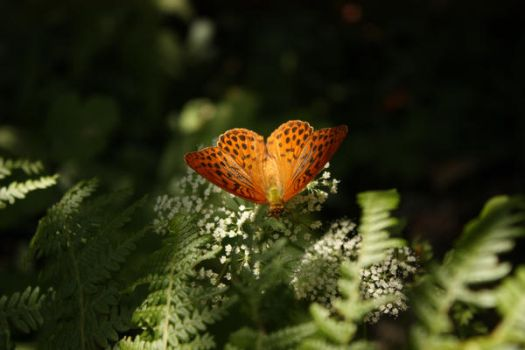 Butterfly 3 by QuiZ04291993