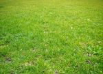 Grass by jaqx-textures