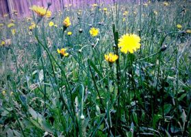 Covered With Green and Yellow by Izness
