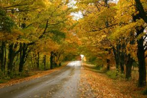 Door County Autumn by Gene-Summers