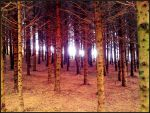 Anonymous forest by dewjack