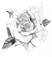 A rose by any other name ... by Artwyrd