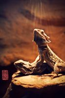 Bearded Dragon II by donnosch
