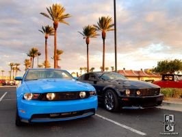 Black n Blue Stangs by Swanee3