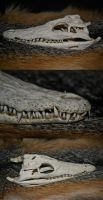 Nile Crocodile skull by Zoodermy